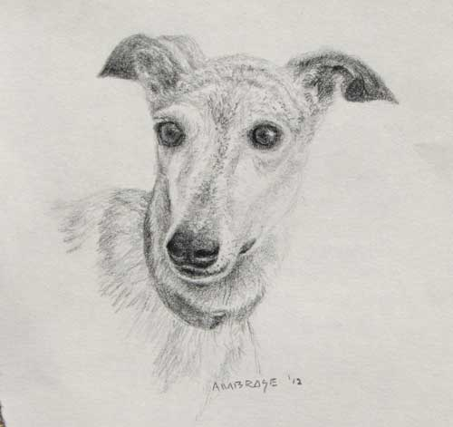 Riedel, pencil sketch by Daniel Ambrose