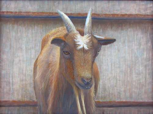 Daniel Ambrose, egg tempera painting of a goat.