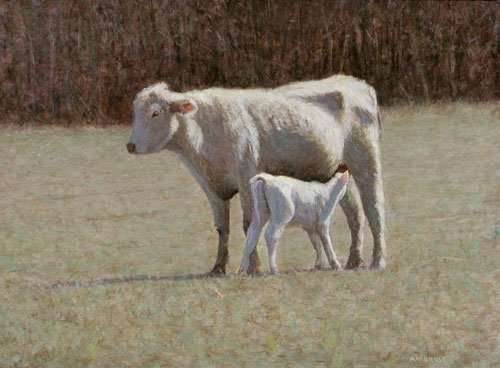 Charolais cow with calf, egg tempera painting by Daneil Ambrose