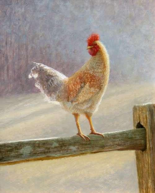 elk-river-rooster-ambrose-500