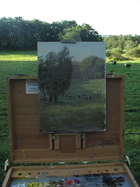 Belted Galloways, plein air painting by Daniel Ambrose